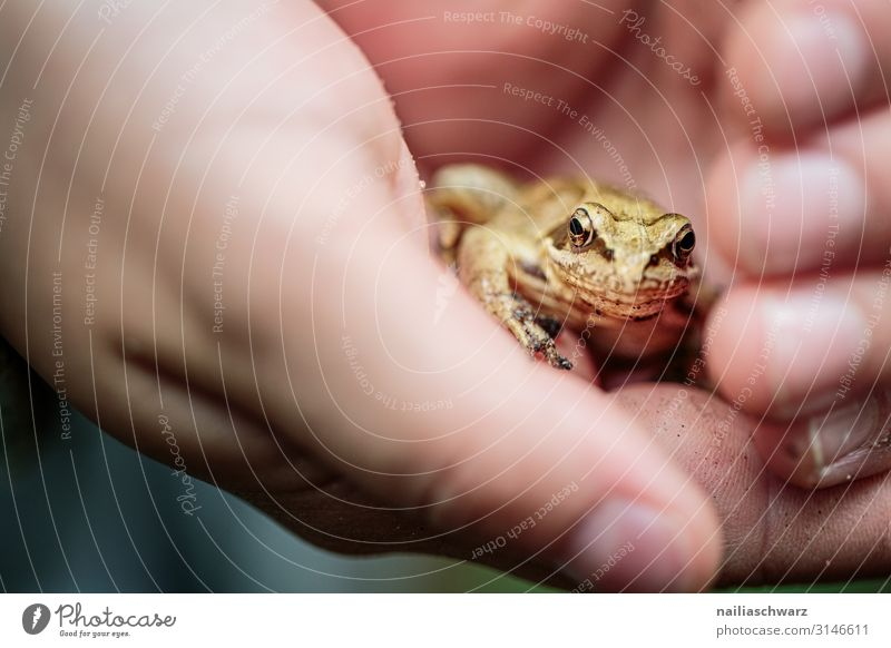 Grass frog in hand Hiking Child Hand Fingers 8 - 13 years Infancy Environment Nature Animal Autumn Forest Wild animal Frog Animal face Baby animal Observe