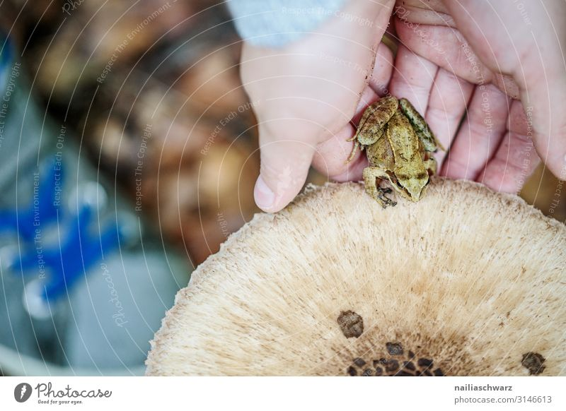 in the wood Human being Child Hand 1 8 - 13 years Infancy Environment Autumn Plant Wild plant Mushroom Mushroom cap Forest Animal Wild animal Frog Observe