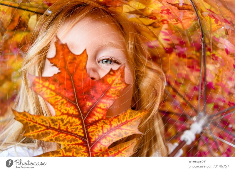 Girl behind coloured leaves Child Toddler Face 1 Human being 3 - 8 years Infancy Looking Near Multicoloured Yellow Gold Red Portrait photograph Autumn
