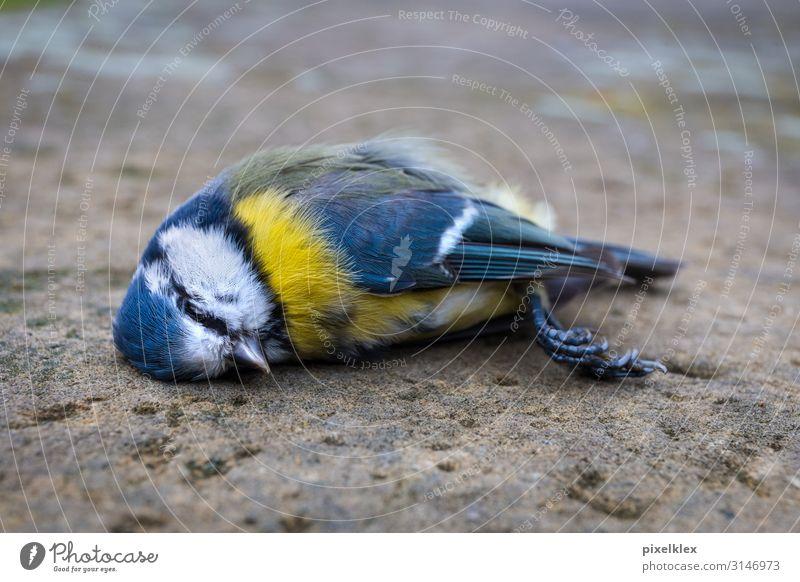 Nature Blue Town Animal Calm Street Yellow Environment Sadness Death Bird Lie Wild animal Sleep Grief Illness