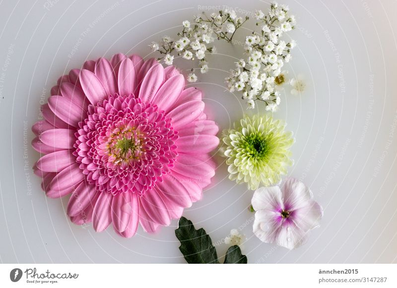 Flowers float in milk water Blossom Gerbera Baby's-breath Leaf Pink White Green Nature Interior shot Bright Romance Wedding Love Water Lifestyle Cosmetics