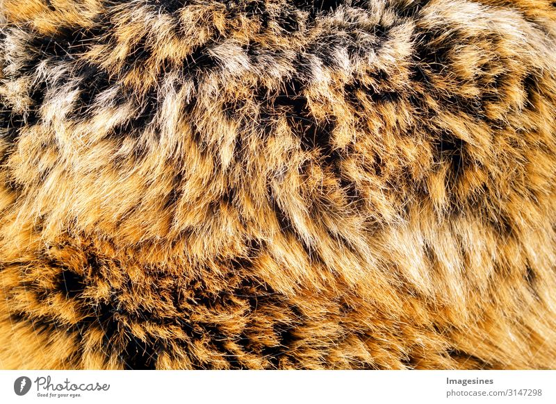 fur Environment Fashion Clothing Pelt Animal Dead animal Background picture Cuddly Responsibility Squander Love of animals Rescue Death Tradition Survive