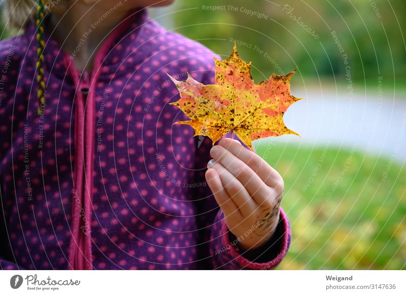autumn find Human being Feminine Girl Infancy 1 3 - 8 years Child 8 - 13 years Autumn Leaf Cold Acceptance Trust Sadness Concern Grief Death Colour photo