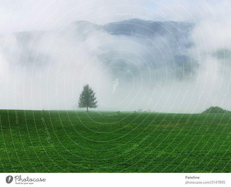 solitary Environment Nature Landscape Plant Sky Clouds Autumn Fog Tree Grass Park Meadow Alps Mountain Natural Green White Loneliness Fir tree Austria