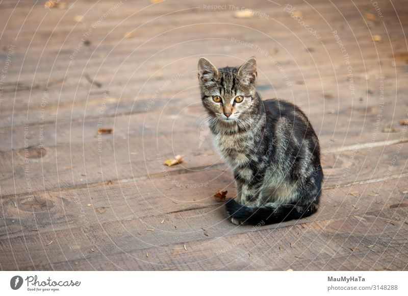 Tabby cat with on wood larder Cat Red Animal Loneliness Wood Funny Small Playing Gray Bright Vantage point Cute Pet Toys Mammal Home