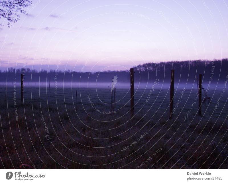 Dawn in blue Fog Dark Morning Pasture Blue