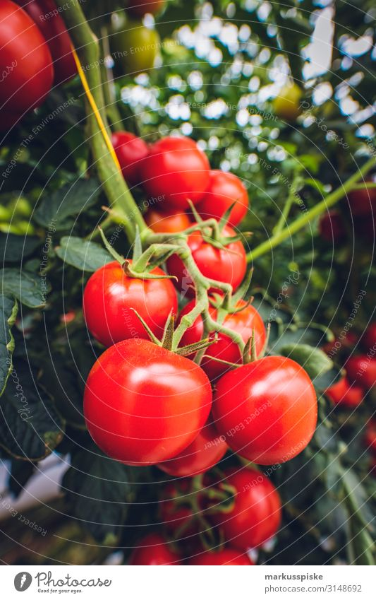 Mega Glasshouse for Tomatoes and Pepper Food Vegetable Nutrition Eating Picnic Organic produce Vegetarian diet Diet Fasting Slow food Healthy Healthy Eating