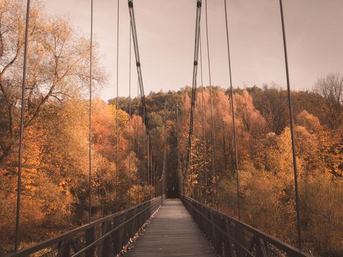 Autumn bridge Nature Colour Beautiful Tree Leaf Architecture Yellow Orange Earth Bright Park Weather Beautiful weather Bridge Cool (slang)