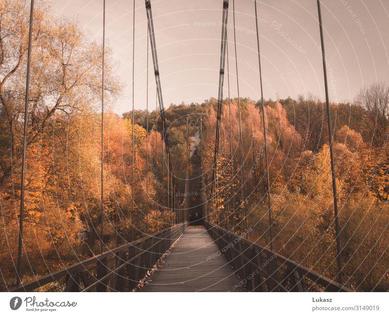 Autumn bridge Nature Weather Beautiful weather Tree Leaf Park Small Town Bridge Architecture Cool (slang) Bright Original Yellow Orange Colour Earth