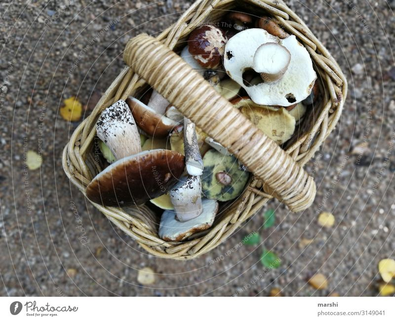 Nature Plant Forest Food Eating Moody Nutrition Cooking Tradition Collection Mushroom Basket Edge of the forest Boletus