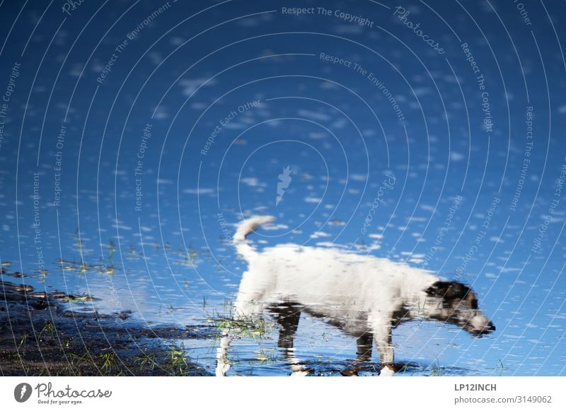 Dog Blue Water Animal Loneliness Friendship Going Wild Dream Crazy To go for a walk Pet Bizarre Puddle Walk the dog