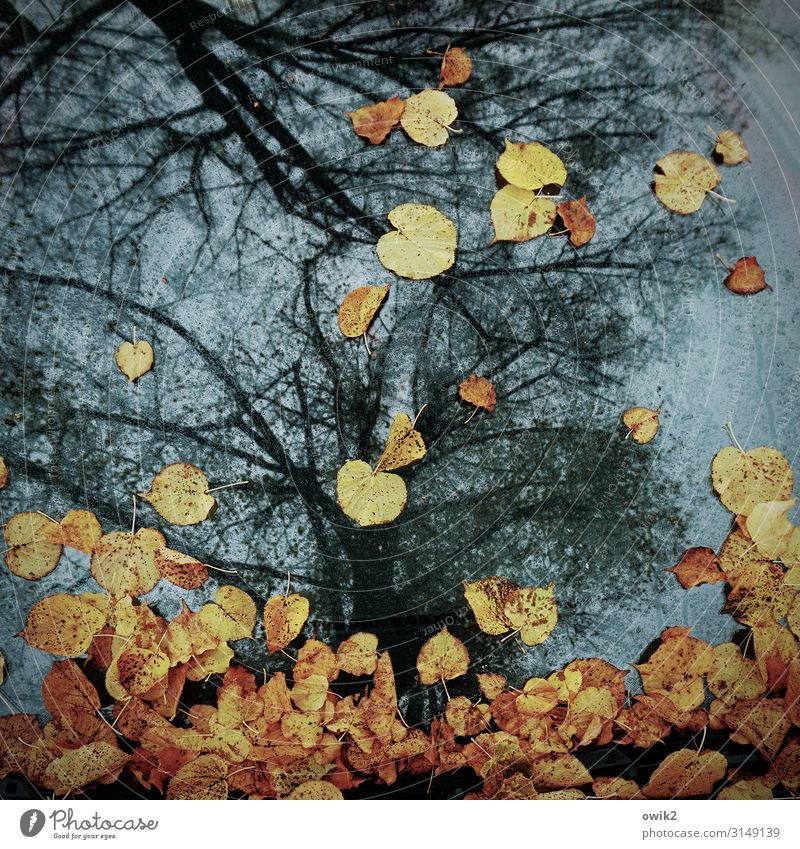 a piece of autumn Environment Nature Autumn Beautiful weather Autumn leaves Leaf Car Windscreen Glass To fall Lie To dry up Multicoloured Tree Colour photo