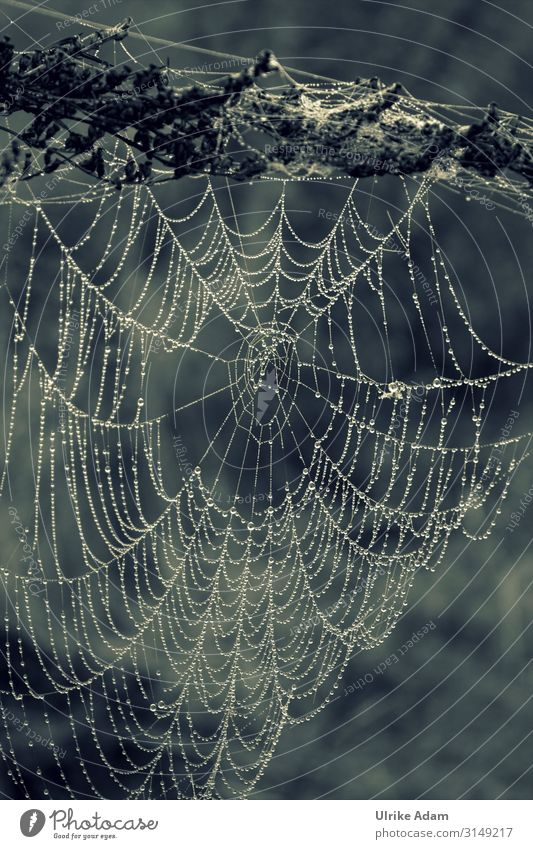 work of art - spider's web in the morning dew Monochrome Spider's web Drop Trickle Net Work of art natural Nature Dew Drops of water Exterior shot Close-up