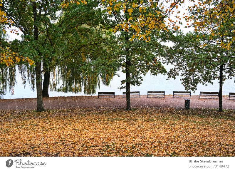 Autumn hanseatic Environment Nature Plant Water Tree Leaf Park Lakeside Alster Hamburg Town Port City Downtown Relaxation To dry up Natural Emotions Moody Calm