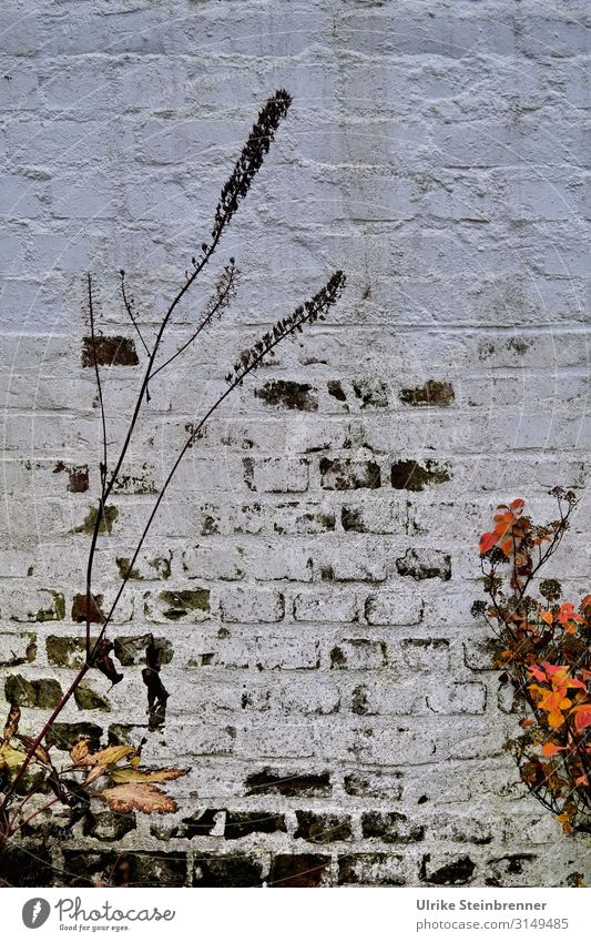 Natural Graffiti | UT HH 19 Nature Plant Autumn Flower Grass Hamburg Downtown Manmade structures Building Wall (barrier) Wall (building) Stand To dry up Dark