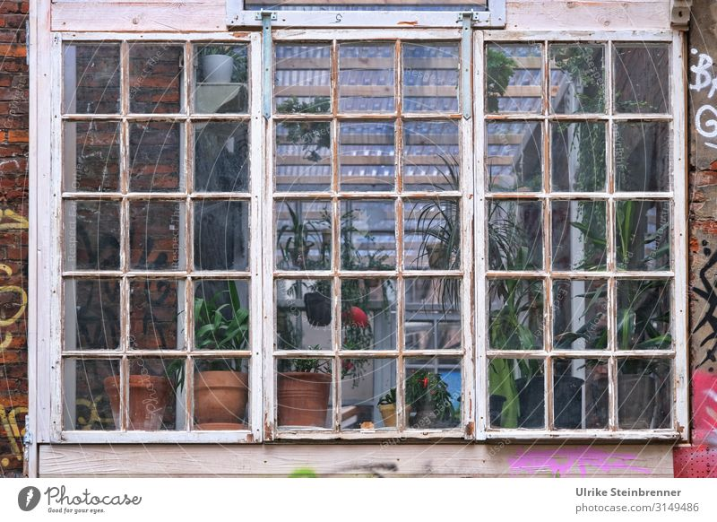 Nature Old Plant Town House (Residential Structure) Joy Window Living or residing Trip Dirty Idyll Adventure Crazy Poverty Blossoming Uniqueness