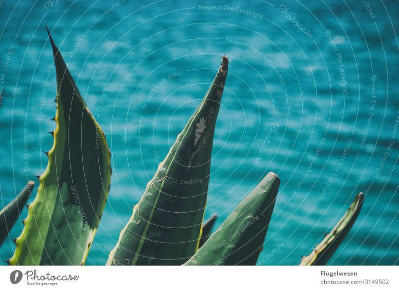 prickly Thorny Thistle Cactus cacti Cactus flower Cactusprickle Cactus fig cactus Cactus field Ocean