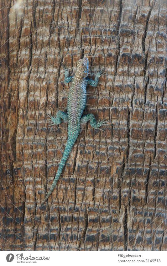 beast Gecko Salamander Animal Palm tree Climbing
