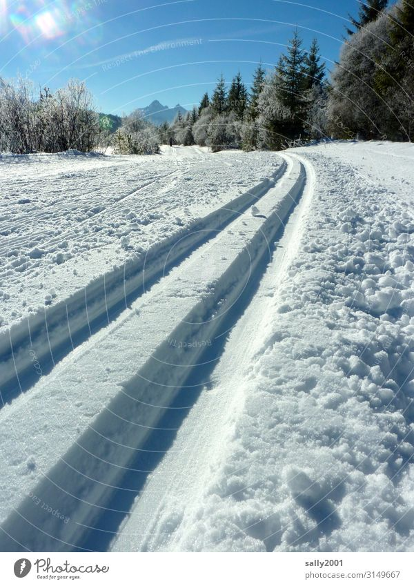 the track is prepared... Sports Winter sports Skiing Cross country skiing Cross-country ski trail Beautiful weather Snow Forest Alps Relaxation Sharp-edged Free