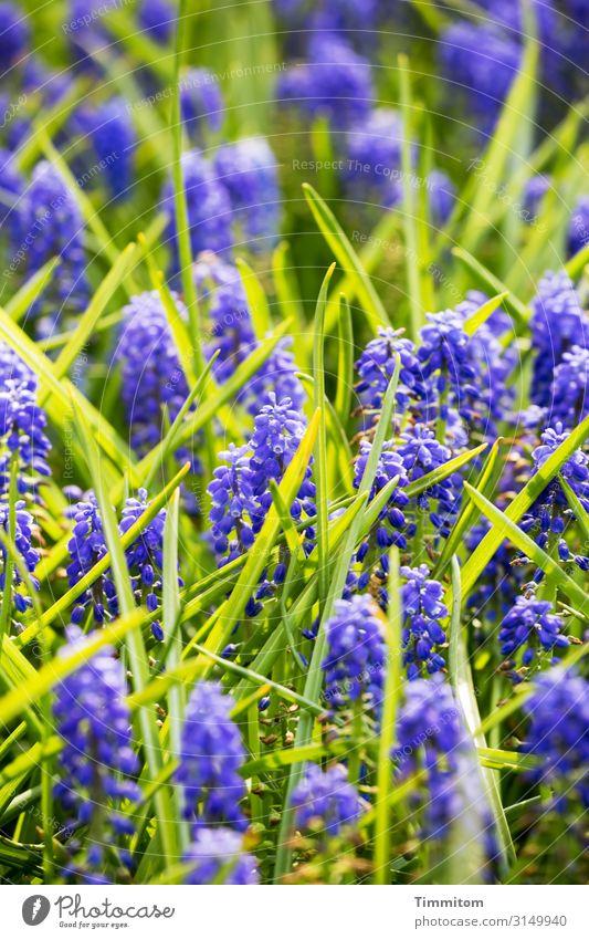 Vacation & Travel Nature Plant Blue Green Flower Leaf Blossom Spring Natural Emotions Park Joie de vivre (Vitality) Blossoming Spring fever Netherlands