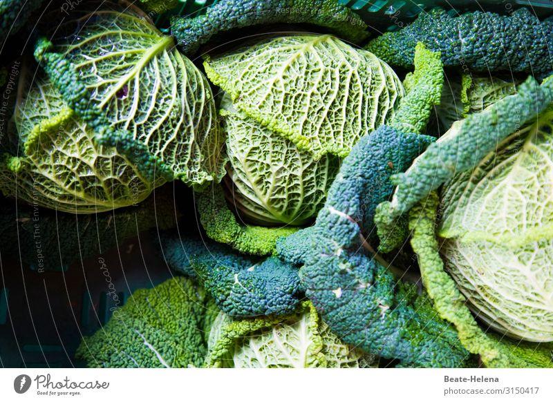 Winter vegetables Savoy cabbage winter vegetables vegetarian salubriously vegan Rachis Vegetable Fresh Nutrition Food Delicious Organic produce Vegetarian diet