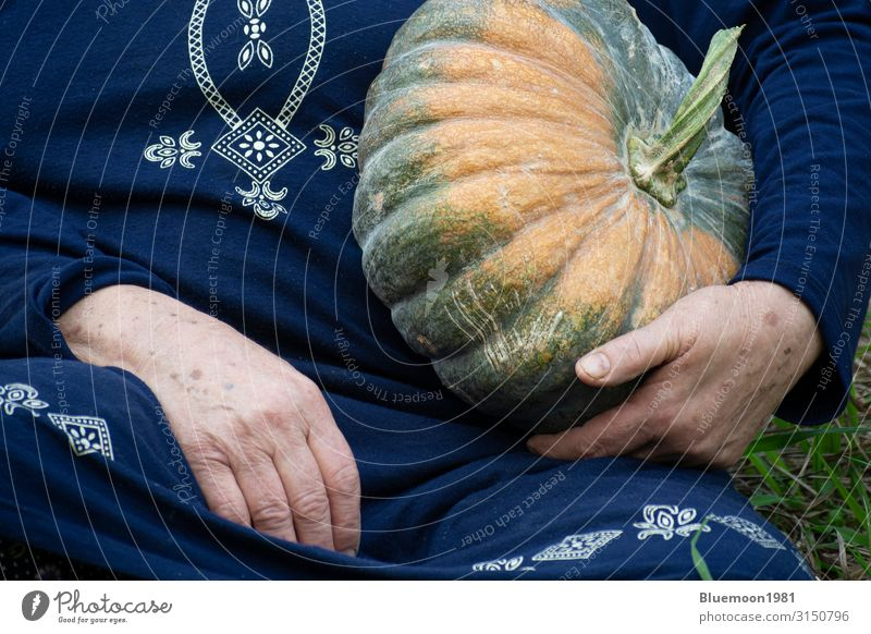 Detail shot of senior hand holding a pumpkin in left hand Vegetable Fruit Vegetarian diet Lifestyle Healthy Eating Leisure and hobbies Garden Hallowe'en