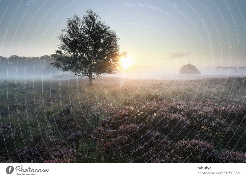 quiet beautiful misty sunrise over heathland Beautiful Sun Nature Landscape Plant Sunrise Sunset Autumn Fog Tree Flower Meadow Forest Wild Pink Serene