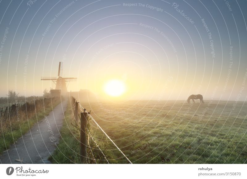 misty gold sunrise with grazing horse and windmil Calm Summer Sun Landscape Horizon Sunrise Sunset Fog Grass Lanes & trails Horse To feed Serene Windmill