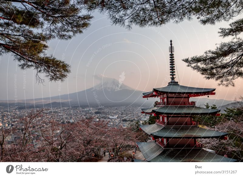 Sunset at Mt. Fuji with some cherry blossoms Architecture Landscape Sunrise Spring Mountain Snowcapped peak Volcano Japan Asia Tower Temple Pagoda Japanese