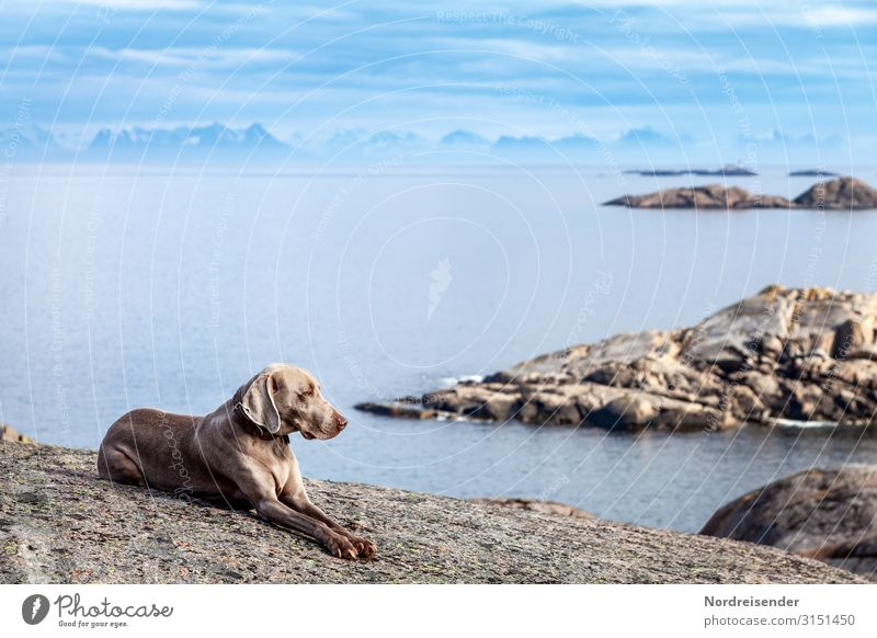 With the dog in Lofoten Vacation & Travel Far-off places Freedom Ocean Island Nature Landscape Elements Air Water Sky Clouds Beautiful weather Rock Mountain