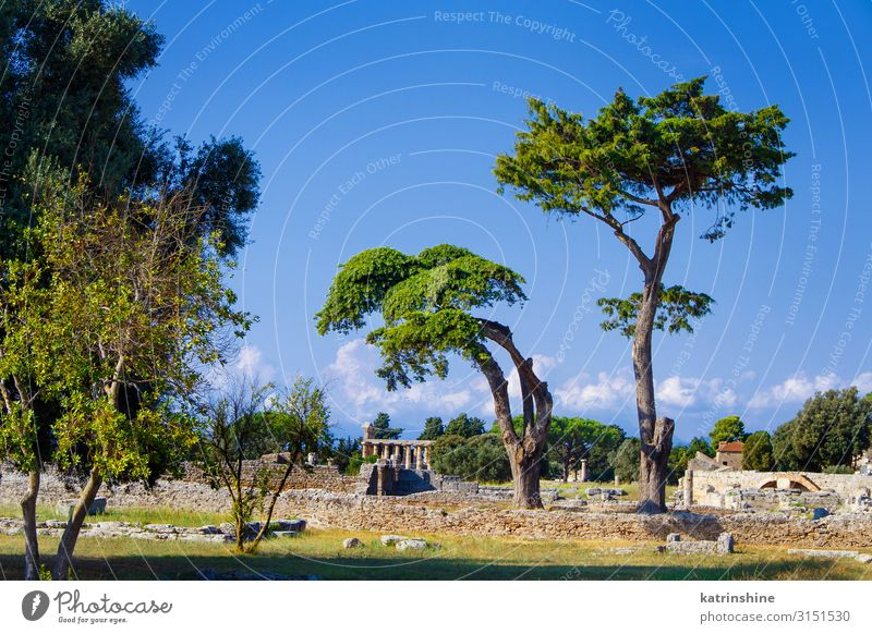 Landscape with the greek Temple. Paestum, Italy Vacation & Travel Tourism Art Culture Park Ruin Architecture Old Poseidonia Acropolis Greek World heritage