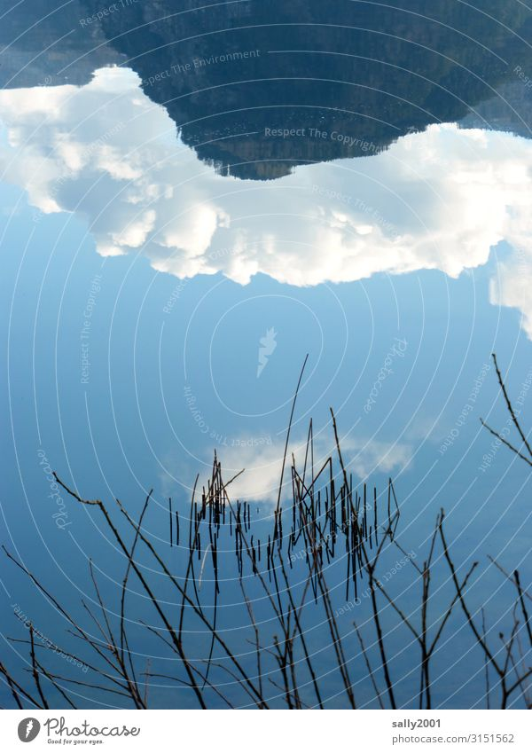 upside-down world... reflection Reflection Lake smooth Calm mountain reed Clouds Water Inverted inverted world Winter Surface of water Lakeside Water reflection