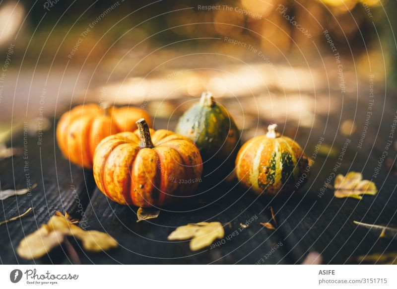 Thanksgiving background with pumpkins on a rustic wooden table Vegetable Garden Decoration Table Feasts & Celebrations Hallowe'en Nature Autumn Warmth Leaf