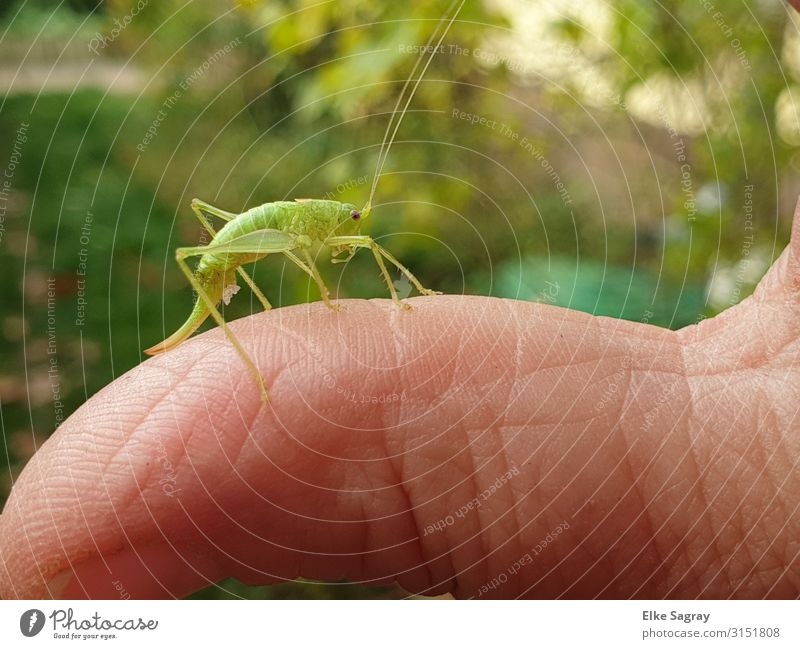 Nature Green Animal Beetle Locust