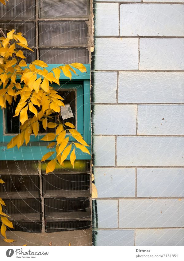berlin autumn Berlin Germany Europe Town Capital city Deserted Industrial plant remise Wall (barrier) Wall (building) Window Stone Glass Blue Turquoise