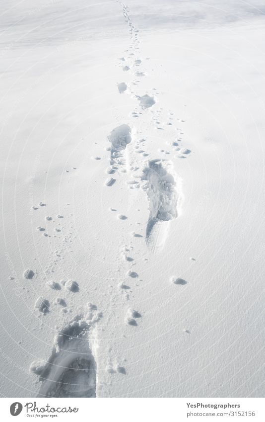 Footsteps in snow. Foot pathway through the snow. Winter scenery Adventure Snow Hiking Nature Climate change Weather Beautiful weather Animal tracks Footprint