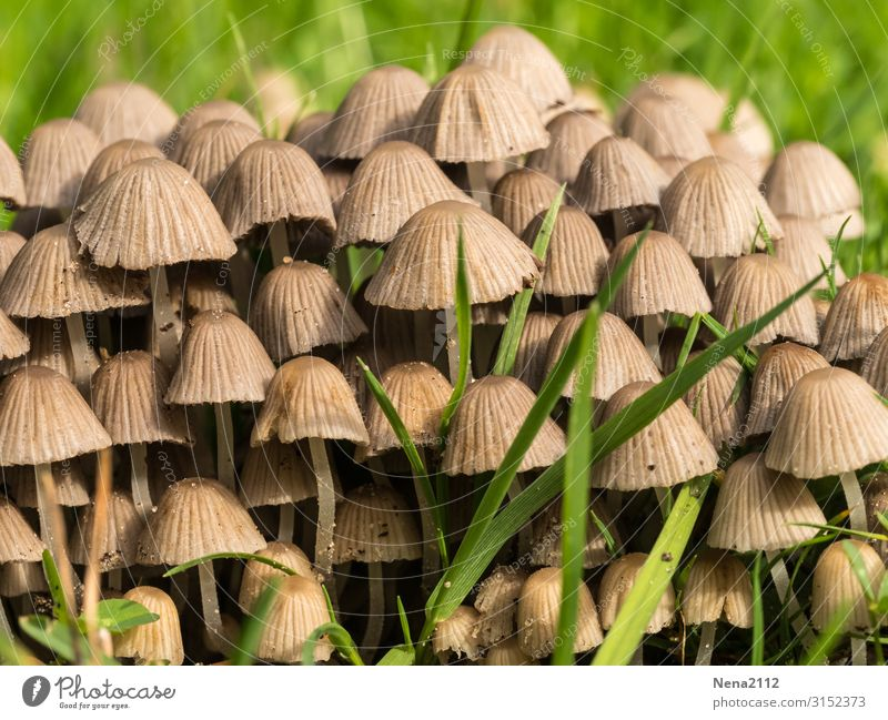 It smells like group building. Nature Garden mushrooms Field grouping quantity a lot Grass Detail out Ground
