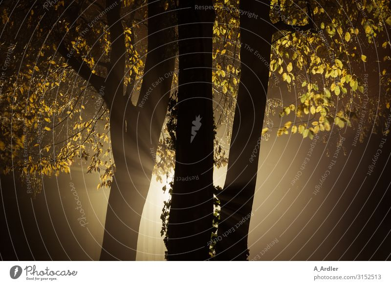 Trees in autumnal evening mood Art Nature Elements Autumn Exceptional Threat Dark Creepy Brown Yellow Black Emotions Moody Fear Bizarre Death Grief Sadness