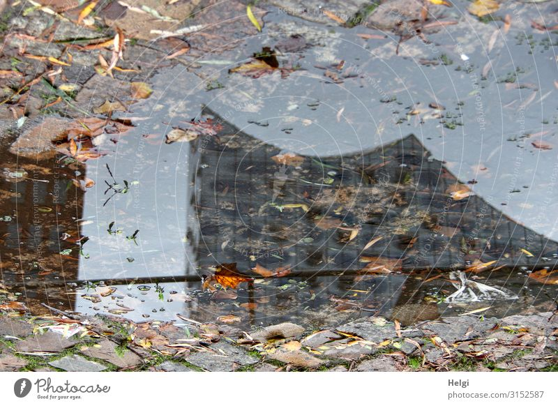 Reflection of a Hamburg sight in a puddle of colourful autumn leaves Autumn Leaf Town Manmade structures Tourist Attraction Elbe Philharmonic Hall Puddle