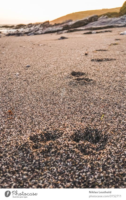 Traces in the sand Sun Beach Ocean Environment Nature Sunlight Summer Beautiful weather Coast Animal Dog Animal tracks 1 Going Walking Tracking Tracks Imprint