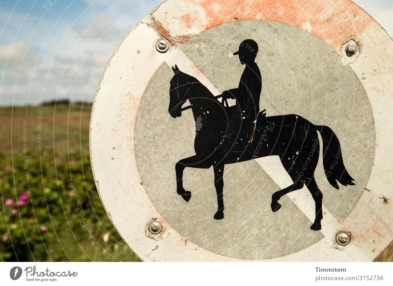 Forever on foot Vacation & Travel Equestrian sports Environment Nature Plant Beautiful weather Blossom Foliage plant Denmark Horse Metal Sign Signs and labeling