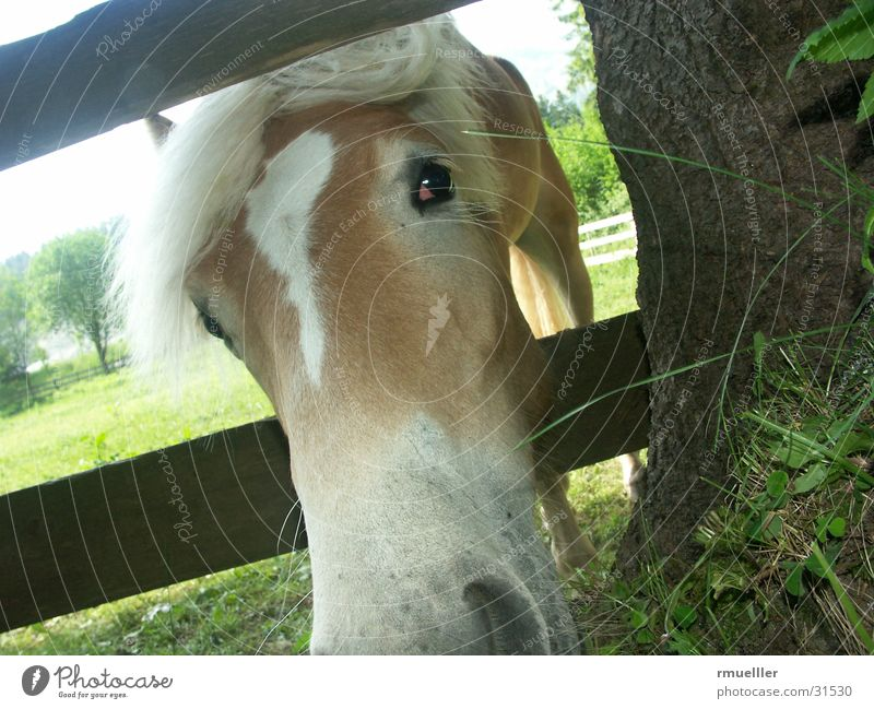 Nature Animal Eyes Meadow Grass Horse To feed Snout Haflinger