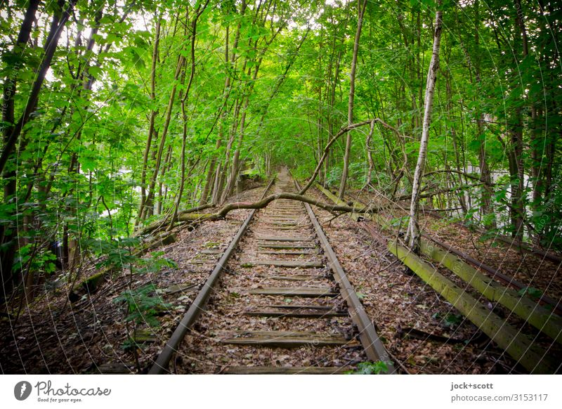 Tracks without connection lost places Summer Tree Branch Commuter trains Railroad tracks Dam Broken Long naturally Green Moody Secrecy Romance Loneliness Idyll