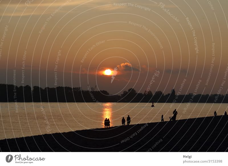 Silhouettes of people at sunset on the Elbe beach in Hamburg Environment Nature Landscape Water Autumn Beautiful weather River bank Beach Elbstrand Illuminate