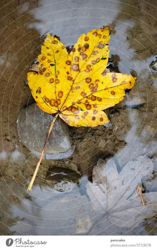 water grave Nature Plant Elements Water Autumn Leaf Forest Swimming & Bathing Autumn leaves Puddle Yellow Point Drown Grave Death Stone Colour photo