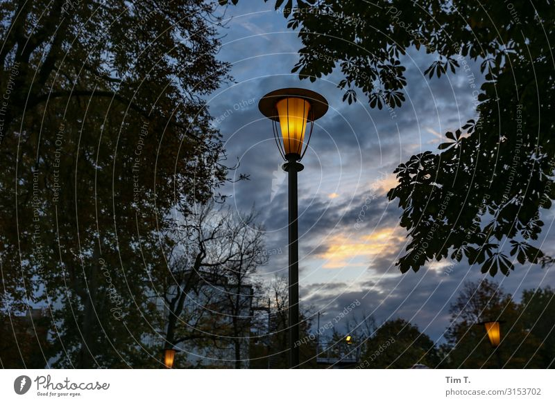 Prater beer garden Prenzlauer Berg Town Capital city Downtown Old town Deserted Relaxation Leisure and hobbies Lantern Beer garden Tree Colour photo