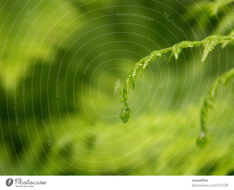 Nature Water Green Rain Drops of water Pteridopsida