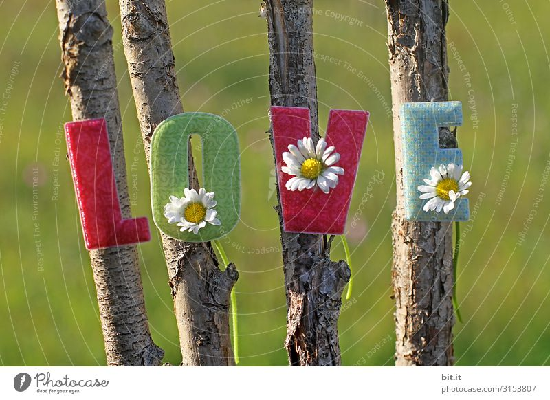 Nature Environment Love Happy Feasts & Celebrations Together Friendship Decoration Characters Birthday Signs and labeling Romance Wedding Kitsch Trust