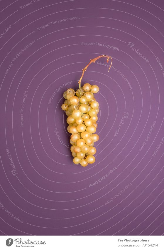 Riesling white grape on a purple background. German grapes Fruit Healthy Eating Autumn Fresh Natural Germany Johannisberger Rhine region above view agriculture