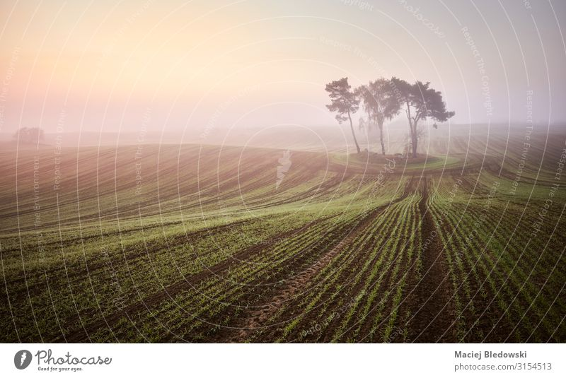 Scenic misty sunrise on a field Beautiful Vacation & Travel Sun Nature Landscape Sky Autumn Fog Tree Agricultural crop Meadow Field Loneliness Uniqueness